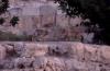 Des renards observés prés du Kottel... (Vidéo)